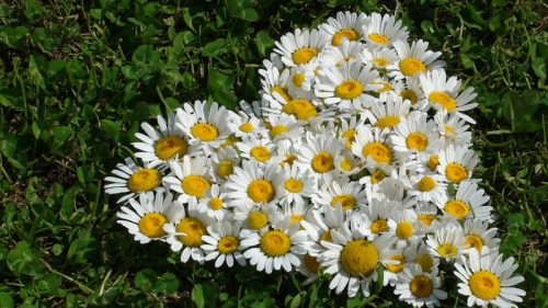 Flowers for Lindsay