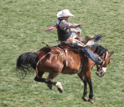 saddle bronc 4