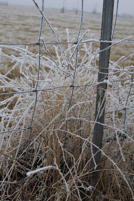 frosty fence 1