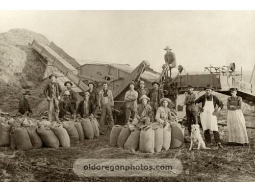 combine thrashing arlington 1900