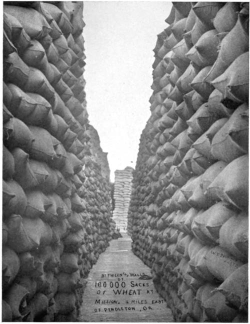 harvested wheat sacks