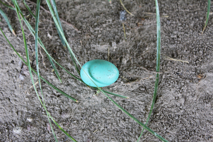 A Robin Egg