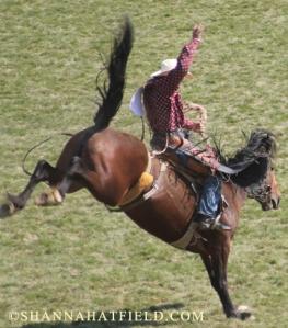 bronc rider 4