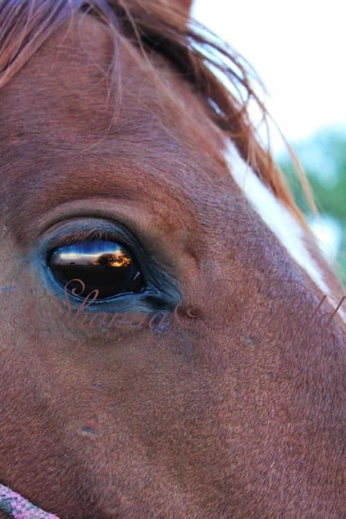 Steve 1 eye