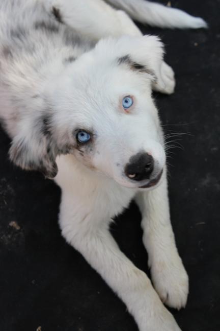a pup 2