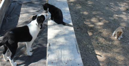 a pup and elvira