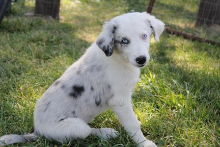 a pup