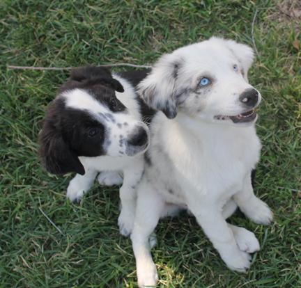 a pup set 2