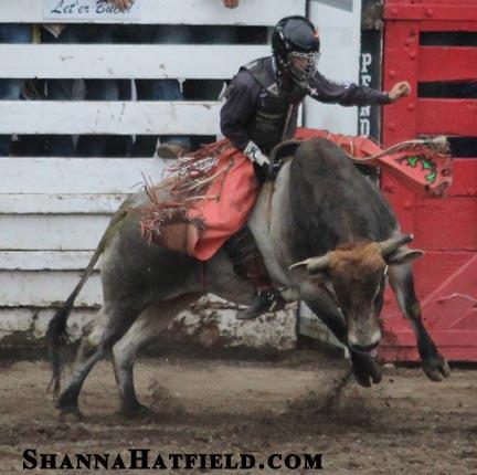 bull-champ