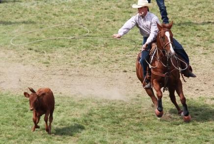 calf roper 1