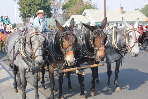 Mules 1